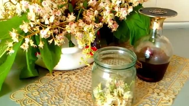 Настойка конского каштана от варикоза, применение растирки в лечении